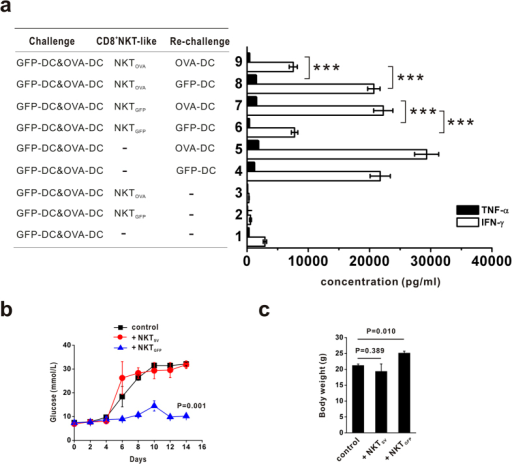 CD8+NKT-like cells involved in immune downregulation in vivo.(a) NKTGFP or NKTOVA cells were injected into naïve mice, which subsequently received immunization with GFP-DCs and OVA-DCs. Two weeks later, splenocytes from each group were co-cultured with GFP-DCs or OVA-DCs, and the TNF-alpha and IFN-gamma production levels were detected in the supernatant at 72 hours. These data are representative of three independent experiments (n = 8). (b,c) NKTGFP and NKTSV cells were pre-injected into RIP-OVA mice, which was subsequently injected peritoneally with OVA-specific CD8 T cells and GFP-DCs loaded with OT-I peptides. The blood glucose dynamics (b) and body weight (c) were measured in both conditions. These data are representative of two independent experiments (n = 8). ***P < 0.001.