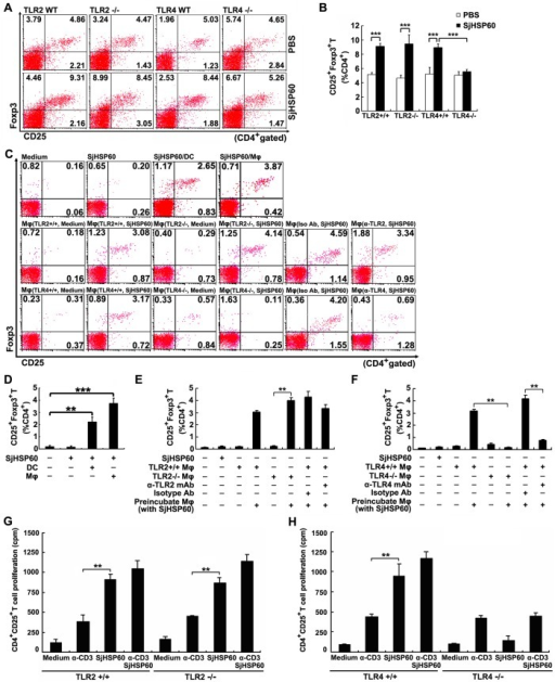 TLR4 signaling is necessary for SjHSP60-mediated Treg increase.(A and B) TLR2-/- or TLR4-/- mice or their WT control littermates were immunized with SjHSP60 or PBS. Ten days after the final injection, CD4+CD25+Foxp3+ Tregs in spleen of individual mice were analyzed by FCM. (C) Purified CD4+CD25- T cells were co-cultured with purified APCs (DC, Mφ, TLR2-/- Mφ, TLR4-/- Mφ, or Mφ pre-treated with anti-TLR2, anti-TLR4 or their isotype control antibodies) at a 2:1 ratio of T cell:APC (DC or Mφ) with or without stimulation of SjHSP60 (0.2 μg/ml). After 3 days, Tregs in co-cultures were analyzed by FCM. (D-F) Graphs of CD4+CD25+Foxp3+ Treg frequencies. (G and H) CD4+CD25+ Tregs purified from mice deficient for TLR2, TLR4 or their control littermates were cultured in medium alone or stimulated with 1 μg/ml anti-CD3 and/or 0.5 μg/ml SjHSP60. On day 3, proliferation of CD4+CD25+ Tregs was determined by [3H]thymidine incorporation. FCM plots are representative of one of three independent experiments. Cells were gated on CD4+ T cells. The bar graph of average percentages ± SD of CD4+CD25+Foxp3+ Tregs are from 5 mice or triplicate cultures representative of one of three independent experiments. **P < 0.01, ***P < 0.001.