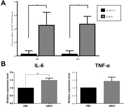 Infection of ORFV suppresses the subsequent IAV infection in mice. ORFV wasadministrated intra-muscularly (IM) or subcutaneously (SC) to BALB/c mice (6 weeksold, n=4) at dosage of 2 × 105 PFU before IAV infection. One group wasadministrated with as a control (n=4). Two days later, all groups of mice received adosage of 1 × 104 PFU IAV via intra-nasal route. Mice were observed tocheck any illness symptoms. Seven days post infection, all the mice were sacrificed,and their lungs were removed for titration of the virus loads (A), and IL-6 and TNF-αexpressions in blood were evaluated by ELISA (BioLegend) (B). Values display the means(+/–SD) of each group. Statistical analysis was performed using unpaired T-test withWelch's correction. P value<0.05, shown with a star symbol,indicates statistical difference between 2 groups.