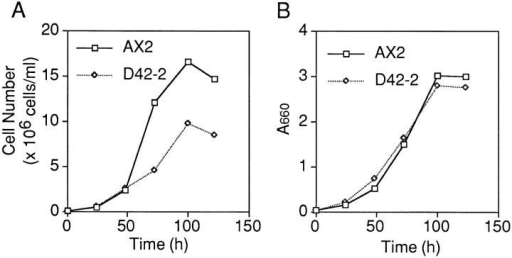 Growth of Dictyostelium cells in axenic suspension.  Wild-type AX2 and gapA− D42-2 cells were diluted in fresh medium at 105 cells per ml, and then shaken at 22°C and 150 rpm.  Their growth was monitored as the increase in cell number (A) or  turbidity (B; absorbance at 660 nm) with the same culture.