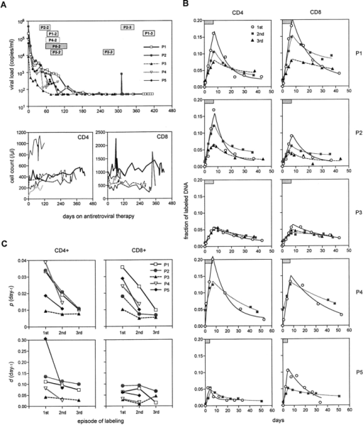 Comparison of T cell kinetics before and during antiretroviral therapy. (A) Changes in viral load as well as CD4+ and CD8+ lymphocyte counts during treatment. The data from each patient are represented by a unique symbol. The periods of repeat D-glucose labeling studies are indicated by rectangular boxes marked by each patient's identification number followed by the episode of labeling. (B) Fraction of labeled DNA in CD4+ and CD8+ lymphocytes from P1–P5 during the first (pretreatment) (○), second (gray square), and third (▴) episodes of labeling. The duration of D-glucose administration is indicated by a box in each graph. Again, the data points are represented by symbols, and the lines show the best fit of the data to the mathematical model. Note that the fraction of labeled DNA on day 0 in the second or third episode is not zero because of residual label from the previous labeling episode. (C) Changes in the estimated values of p (proliferation rate) and d (death rate) with antiretroviral therapy.