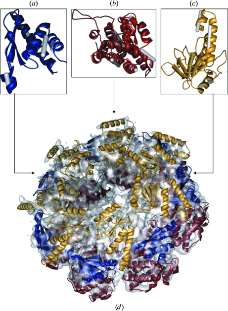 A priori known domain reconstruction. (a–c) The matched helices of the top-ranking alignment for the intermediate (blue), equatorial (red) and apical (yellow) domains, respectively. (d) A quasi-atomic structural model of a GroEL ring as revealed from the cryo-EM map (depicted in grey). This figure and subsequent figures were prepared using Chimera (Pettersen et al., 2004 ▶).