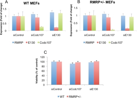 Genes near RMRP are not essential for cellular viability.MEFs from E13.5 mice of either A. WT or B. RMRP+/− were transfected with siRNAs targeting Ccdc107 or E130. Three days later RNA was extracted from the cells and qRT-PCR was preformed using primers for RMRP, Ccdc107 or E130. C. The same cells as in A and B were plated (5000 cells/well) in a 96 well plate and 7 days post transfection cell number was assessed by Cell titer glow. Error bars represent SD of three replicas.