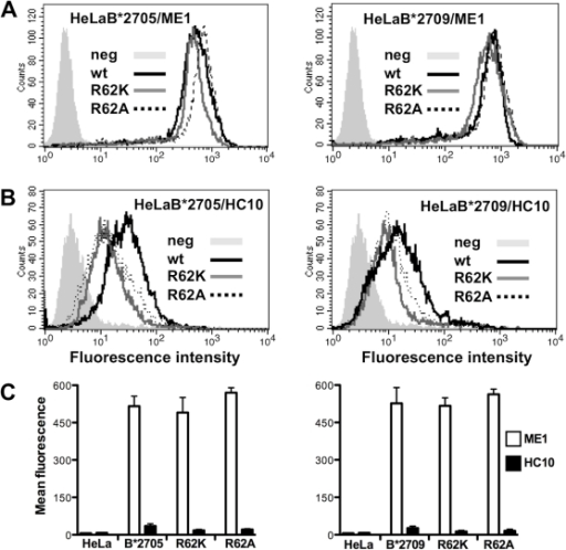 Cell surface expression of R62A and R62K B*2705/09 mutants on Hela transfectants.A) Surface expression of R62A and R62K mutants within B*2705 (left panel) and B*2709 context (right panel) compared to that of wt molecules. Cells were stained with ME1 mAb and analysed by flow cytometry analysis. B) Surface expression of free heavy chains of R62A and R62K B*2705 mutants (left panel) and R62A and R62K B*2709 mutants (left panel) versus wt molecules analysed with HC10 mAb. Grey histograms represent wt HeLa cells (neg) used as controls. Mouse IgG negative controls have not been shown. One representative experiment is shown here. C) Comparison of the surface expression of wt (B*2705 on left panel; B*2709 on right panel) molecules with the relative mutants as folded heterodimers (white bars) and β2m-free heavy chains (black bars). Untransfected HeLa cells (HeLa in the figure) do not expressed unfolded heavy chains. The results are expressed as mean fluorescence ± SD of five/six independent experiments.