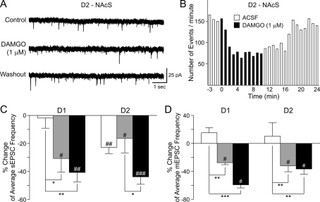 Effects of DAMGO on sEPSCs in MSSNs(A) Representative recordings of sEPSCs (holding potential −70 mV) in a D2 receptor-expressing MSSN from NAcS before, during, and after washout of DAMGO (1 μM). (B) Representative time-course of a typical recording from another D2 receptor-expressing MSSN from NAcS before, during and after DAMGO (1 μM). DAMGO decreased the frequency of sEPSCs, which was reversed after DAMGO washout. (C, D) Histograms show the effects of DAMGO on sEPSCs (C) and mEPSCs (D) in D1/D2 cells in the DLS, NAcC and NAcS. In (C, D), data were calculated as changes of average frequencies of EPSCs during versus before DAMGO application, divided by the corresponding values before DAMGO. n = 10–14 (C) or n = 5 (D) in each group. The data were analysed using two-way ANOVAs followed by Bonferroni post hoc tests. *P<0.05, **P<0.01, ***P<0.0001 compared with the DLS. Also, paired t tests were performed between the average frequencies of EPSCs before versus during DAMGO application. #P<0.05, ##P<0.01, ###P<0.001 respectively.