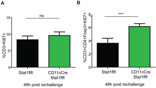 Dendritic cell Stat1 regulates adaptive immunity.Splenocytes of immunised and rechallenged Stat1flfl and CD11cCreStat1flfl mice were isolated and evaluated for proliferating CD3+ cells (8A) and Tregs (CD3+, CD4+, FoxP3+, Ki67+) (8B). Means and standard deviations of one representative experiment out of two independently performed experiments are shown with 5 mice per group.