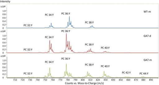 Summed spectra from the precursor ion scan for phosphatidylcholine (PC) from the WT or GA7 Arabidopsis seeds. PC 36:Y indicates PC species with a total of 36 carbons with a total number of Y double bonds in the two acyl chains. Y axis represents the response of ion scan.