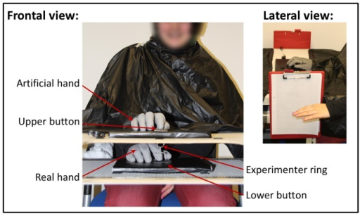Experimental design, frontal view.Participants placed their right hand on the lower plate, whereas the artificial hand was placed directly above on the upper plate. The artificial hand's index finger and the lower button were connected via a string. Hence, whenever either the lower button was pressed by the participant (self-agency) or the ring was moved up or down by the experimenter (other-agency), the index finger of the artificial hand moved up or down accordingly. Lateral view. Illustrated is the measurement of the proprioceptive drift. Participants closed their eyes, stretched out their left arm and indicated with their left index finger the perceived height of their right hand. The height of the participant's left index finger was then marked by the experimenter onto the scale paper attached to each side of the table.