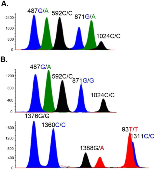 Representative electropherograms of the SNaPshot assay using multiplex extension primers.The homozygous alleles yield only one peak, whereas heterozygous alleles yield double peaks. Female A was heterozygous at both the Mahidol (487G/A) and the Viangchan (871G/A) loci. Female B was heterozygous at the Mahidol (487G/A) and Kaiping (1388G/A) loci.