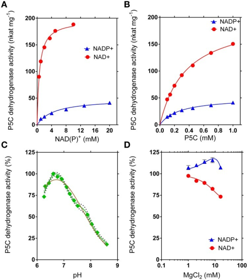 Kinetic features of rice P5C dehydrogenase. The activity of purified recombinant rice P5C dehydrogenase (0.5 μg) was measured for up to 30 min at 35°C in the presence of increasing concentrations of NAD(P)+(A) or L-P5C (B). Invariable substrates were fixed at the same levels as in the standard assay. Plotting of data from Michaelis–Menten graphs into the Lineweaver–Burk double reciprocal plots allowed the calculation of affinity constants and Vmax values for the NAD+- and the NADP+-dependent reaction (Table 2). The pH-dependence of enzyme activity was determined using NAD+ as the electron acceptor (C). Better fiting of the experimental results was obtained assuming the sum of two gaussian distributions (green line r2 = 0.9834) than a single gaussian (brown line; r2 = 0.9504). The 95%-confidence intervals of the adopted interpolating curve are indicated by a dotted line. The effect of Mg2+ ions in the range from 1 to 10 mM was evaluated by adding MgCl2 to the standard reaction mixture (D). In all cases, at least three replicates were carried out for each treatment, and mean values ± SE are presented.