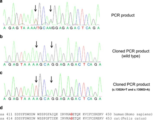 Sequence analysis of the LPL variants. (a–c) Segments of genomic DNA sequence from LPL exon 8 of the patient showing (a) the two heterozygous mutations, c.1302A>T and c.1306G>A, detected in the PCR product, (b) the wild-type sequence detected in about the half of the sequenced cloned PCR products and (c) the sequence carrying the two mutations as detected in the other half of the cloned PCR products. (d) Alignment of the LPL amino-acid sequences (single-letter code) from humans and domestic cats in the domain containing the two missense variations detected in the patient. The glycine (G) residue at position 436 and at position 439 mutated in our patient and the cat colony with LPL deficiency is highlighted in red (The alignment was based on UniProt sequences with accession numbers P0685 (human LPL) and P55031 (cat LPL).