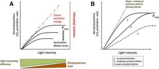 The impact of photoinhibition on leaf photosynthetic efficiency. a: schematic depiction of how excess excitation energy is formed by the saturation of CO2 assimilation and the continued absorption of irradiance. This results in a lowering of light harvesting efficiency under low light as photoprotective processes such as NPQ begin to form and reach a maximum under high light. The proportion of excess excitation energy rises as CO2 assimilation capacity falls. b: schematic depiction of the lowering of quantum yield and maximum photosynthetic capacity according to the severity of photoinhibition (adapted from Murchie and Niyogi 2011)