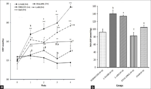 Effect of different treatments on blood pressure: (A) Time course of systolic blood pressure (SBP in mmHg) measured using the tail cuff method; (B) Mean arterial blood pressure (MABP in mmHg) on Day 28 measured by invasive carotid artery cannulation. Data expressed as mean ± SEM. N= number of rats **p < 0.01, ***p < 0.001 compared with basal SBP (at week 0) (within the group comparison) using one-way ANOVA followed by Bonferroni as a post-ANOVA test. ap < 0.05, bp < 0.01, cp < 0.001 compared with NORM-CON; αp < 0.05, βp < 0.01, γp < 0.001 compared with L-NAME control (inter-group comparison) using two-way (for SBP) and one way ANOVA (for MABP on Day 28) followed by Bonferroni as a post-ANOVA test