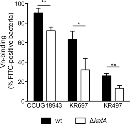 H. pylori D katA strains are impaired in Vn-binding.Wt and ΔkatA mutants of H. pylori strains CCUG18943, KR697, and KR497 were incubated with 3 μg of serum Vn. The percentage of Vn-binding was measured by flow-cytometry using FITC-labeled anti-Vn Ab. Statistical significance was determined using Students t-Test, where (*) equals p ≤ 0.05 and (**) equals p ≤ 0.01. Data presented are the mean and SD of three independent experiments performed in technical duplicate.