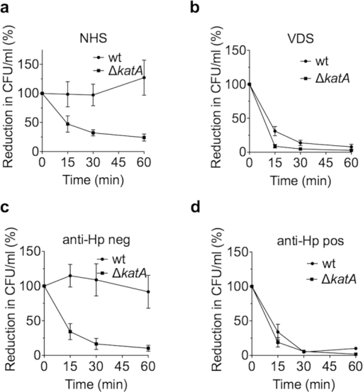KatA increases complement resistance in a vitronectin-dependent manner.The resistance to serum complement of KR697 wt and ΔkatA was tested in a series of assays using 5% normal human serum (NHS) of unknown anti-H. pylori antibody status (a), NHS of unknown anti-H. pylori IgG status, which was depleted from vitronectin (VDS) (b), NHS of donors negative for anti-H. pylori IgG (c), and NHS of donors positive for anti-H. pylori IgG (d). Survival rates at 15, 30 and 60 min after addition of serum were determined by counting colony forming units (CFU). Depicted is the reduction in CFU/ml in percent. Results are the mean and SE of at least three independent experiments performed in technical duplicate.