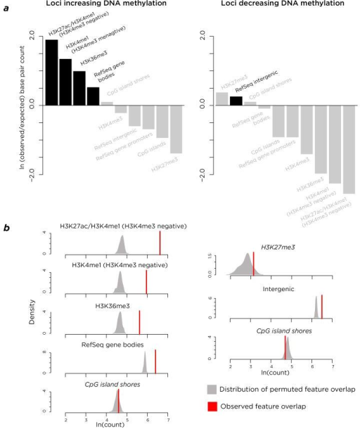The genomic contexts of loci gaining or losing DNA methylation. In panel (a) we show the observed/expected ratio for overlap of the loci with distinctive DNA methylation with different genomic features. The loci with increasing DNA methylation are enriched at candidate enhancers (with histone H3 lysine 4 monomethylation H3K4me1 and H3K27ac but not co-incident H3K4me3 that would indicate promoter function). These loci are also enriched at regions likely to be transcribed (with H3K36me3 and at RefSeq gene bodies). These enrichments were tested by permutation analyses (b), revealing them to be non-random (black). Loci where DNA methylation is lost during disease progression is enriched at several genomic features (a) but only that for intergenic sequences survives the permutation analysis of significance in panel (b).