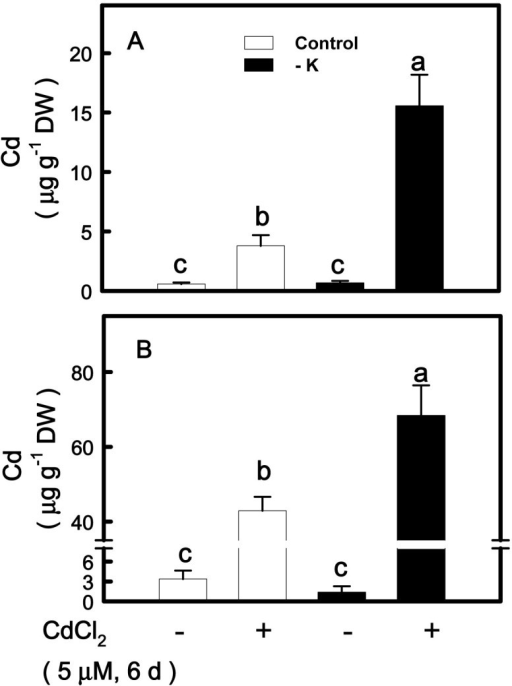 Effect of CdCl2on the concentrations of Cd in shoots (A) and roots (B) of rice seedlings grown under K-sufficient (control) and -deficient (−K) conditions. Rice seedlings were grown under control and − K conditions for 12 days. Control and − K seedlings were then transferred to the control and − K nutrient solution with or without 5 μM CdCl2 for 6 days, respectively. The shoots and roots were then used to determine Cd concentration. Bars indicate standard errors (n = 4). Values with the same letter are not significantly different at P < 0.05.