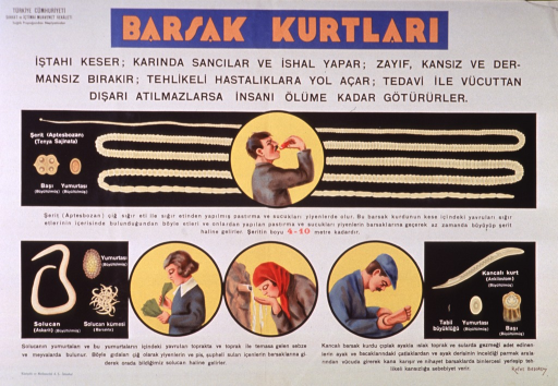 <p>Predominantly white poster with orange and black lettering.  Publisher information in upper left corner.  Title at top of poster.  Visual images are illustrations of three types of intestinal worms at different stages of development.  Additional illustrations show a man eating, a girl eating raw vegetables, a woman drinking from a spring, and a man with cuts on the sole of his foot.  Text appears to describe the worms and how people become infected.</p>