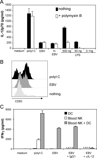 Myeloid DCs Can Sense EBV and Subsequently Activate NK Cells via IL-12(A) CD11c+ myeloid DCs (1 × 105) were purified to 99.8% purity by flow cytometric sorting and exposed to polyI:C (25 μg/ml), EBV (MOI of 1, 5 × 105 RIU/ml), and LPS in the absence and presence of polymyxin B (25 μg/ml), an inhibitor of LPS-mediated TLR4 activation. IL-12p70 was detected by ELISA 24 h later.(B) Purified DCs were exposed to polyI:C (25 μg/ml) or EBV (MOI of 1, 5 × 105 RIU/m), and upregulation of the DC maturation marker CD83 was detected by flow cytometry 24 h later.(C) Flow-sorted CD11c+ DCs and peripheral blood NK cells were cultured together or separately in the presence of polyI:C (25 μg/ml), or EBV (MOI of 1, 5 × 105 RIU/ml). IFN-γ was detected by ELISA 24 h later. Where indicated, IL-12 was blocked in selected experiments with a specific antibody (n.d., not determined). Data represent results from at least three independent experiments performed in duplicates.