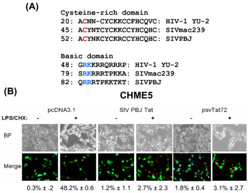 SIV Tat also exerts a cytoprotective effect. (A) Sequence comparison of the cysteine-rich and basic domains from HIV-1 YU-2, SIV mac239 and SIV PBJ. Numbers indicate residues on the first amino acids of the shown sequences. Colored residues in HIV-1 Tat were mutated in this study. (B) CHME5 cells were cotransfected with a plasmid encoding GFP and constructs expressing the first exon of HIV-1 Tat (psvTat72), SIV-PBJ Tat, or with an empty plasmid (pcDNA3.1) using Lipofectamine. Cells were then treated with LPS/CHX and analyzed for cell death. Bright fields (BF) and merged (red+green) fields are shown. Transfected cells are GFP+ cells (green), dead cells (red). The percentage of cell death induced in GFP+, EthD+ cells is shown with the SD from three independent experiments.