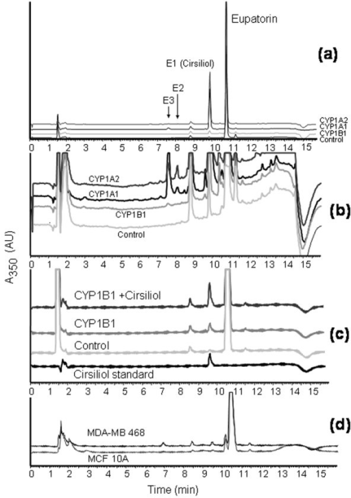 Metabolic profile of eupatorin (10 μM) metabolism by CYP1 family enzymes and identification of cirsiliol as the primary metabolite. (a) Typical high-pressure liquid chromatography (HPLC) traces of 20-minute incubation of CYP1 enzymes with eupatorin. (b) Expansion of (a) showing metabolites E2 and E3. (c) Co-elution studies of eupatorin with cirsiliol. A 20-minute CYP1B1 incubate of eupatorin was spiked with cirsiliol (0.2 μM). Reaction mixtures contained eupatorin, NADPH (nicotinamide adenine dinucleotide phosphate), and recombinant microsomes purchased from Gentest Corporation (now part of BD Biosciences). Reactions were terminated by the addition of 1% acetic acid in methanol. (d) HPLC trace of metabolism of eupatorin in MDA-MB-468 cells. Samples were analysed by HPLC using a UV detector at 350 nm. Experiments were performed in triplicate. A350: absorption of light at wavelength 350 nm. AU: arbitrary units.