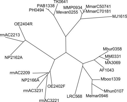 Phylogenetic analysis of DUF439 proteins. Unrooted phylogenetic tree by neighbor-joining, calculated from the multiple alignment shown in Figure 6. Species can be derived from the prefix of the protein identifier as explained in the legend of Figure 6.