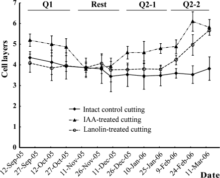 Statistical analysis of the effect of exogenous IAA on cambium reactivation of 1- or 2-year-old dormant cuttings of P. tomentosa in water culture. Cell layers of IAA-treated cuttings from late September to the end of October and from late December to the middle of March increased (P <0.05), while from early November to late December they showed no change (P >0.05. Cell layers of lanolin-treated cuttings from late September to late January showed no change (P >0.05), but they increased from early February to the middle of March (P <0.05). Cell layers = cambium cell layers+recently formed xylem cell layers+recently formed phloem cell layers. The P-value was generated between an IAA-treated cutting and an intact control cutting or beteeeen a lanolin-treated cutting and an intact control cutting at each time point.