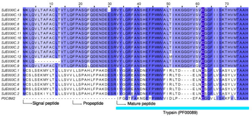 N-terminal sequence alignment of SPSVs (serine proteases from scorpion venoms). SJEs are clusters from this work. P0C8M2 is BMK-CBP obtained from the scorpion Mesobuthus martensii.