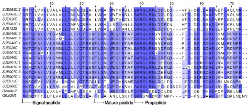 Sequence alignment of cytolytic peptides. SJEs are clusters from this work. Q8MMJ7 is cytotoxic linear peptide IsCT from the scorpion Opisthacanthus madagascariensis, and Q6JQN2 is BmKn2 from Mesobuthus martensii.