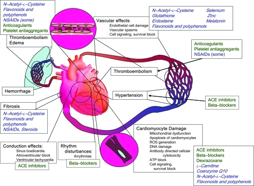 Examples of major mechanisms causing cardiotoxicity of anticancer treatments (black text), clinically used therapeutic agents (green text), and potential protective agents (blue cursive text). ROS = reactive oxygen species; ACE = angiotensin-converting enzyme, NSAIDs = nonsteroidal anti-inflammatory drugs.