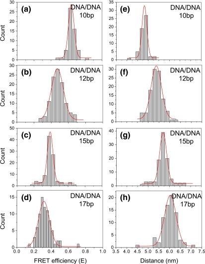Histograms summarized from single molecule studies for FRET efficiencies (a–d) and calculated distances (e–h) for the dsDNA 10 bp, 12 bp, 15 bp, and 17 bp, respectively
