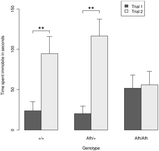Immobility in the forced swim test is attenuated in after hours mice.Results from the forced swim test indicate no significant difference in immobility in trial 1 but the increase in immobility observed in trial 2 was not seen in Afh/Afh mice. (Data shown is mean ± SEM). **, P<0.01 results from posthoc t-tests comparing immobility in trial 1 vs. trial 2 in Afh/Afh. Afh/+ and +/+ mice.