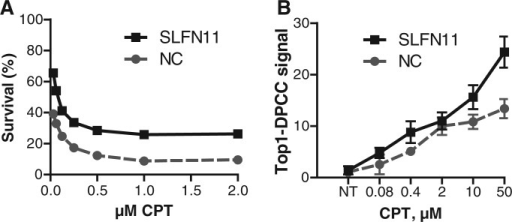 SLFN11 siRNA treatment promotes CPT resistance but increases the burden of genotoxic DNA–protein adducts. (A) Survival of GM369 cells treated with siRNA to SLFN11 or a negative control (NC) siRNA, then exposed for 30 h to indicated doses of CPT. (B) Top1–DPCC signal in GM369 cells treated with siRNA to SLFN11 or a negative control (NC) siRNA, then exposed for 30 min to the indicated doses of CPT. Weighted signals were normalized across immunoblots to compare biological replicates of assays performed on different days, (20).