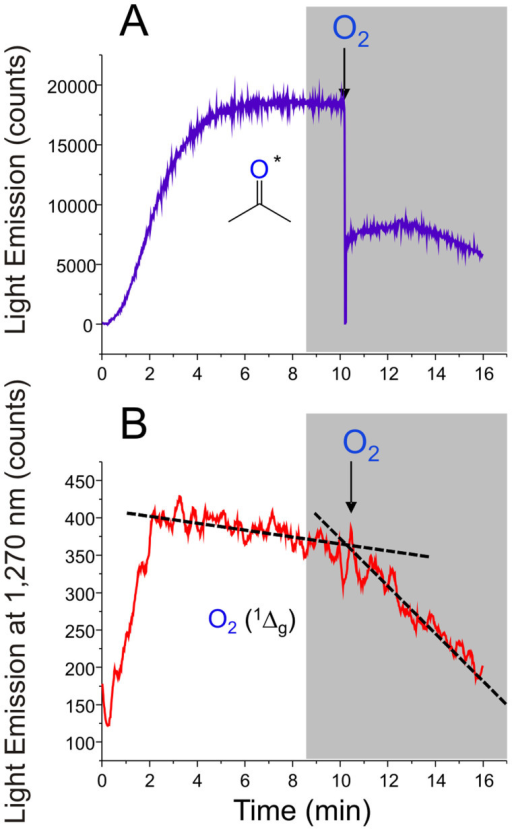 Effect of pure O2 purging on the chemiluminescence intensity elicited by TMD.(A) UV-visible light emission time course of triplet excited acetone during the thermolysis of 5 mM TMD in CCl4 at 70°C, and (B) Monomol light emission of O2 (1Δg) recorded during the decomposition of 5 mM TMD in CCl4 at 70°C. The arrow in both graphs indicates the time elapsed in O2 purging.