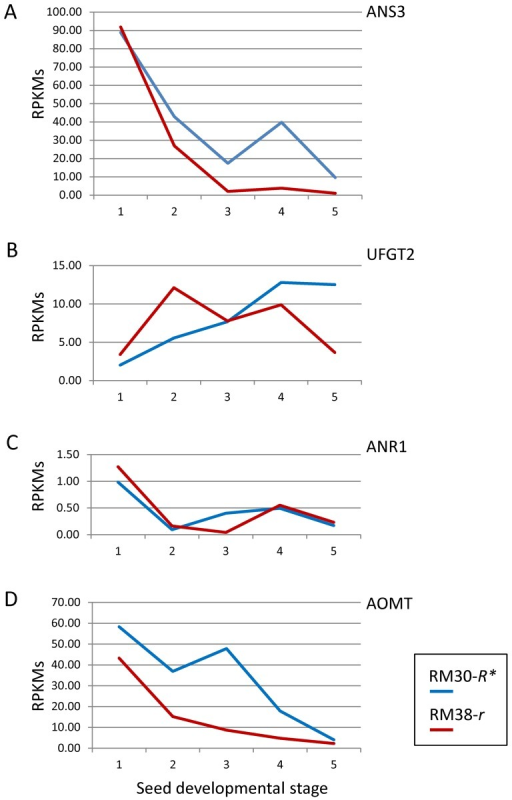 "Differential Expression of Four Genes That Function in the Last Steps of Anthocyanin and Proanthocyanidin Synthesis Between the Black Seeded RM30-R* and Brown Seeded RM38-R* Lines.Transcript levels are in RPKMs plotted against the same five stages of seed coat development as shown in Figure 4 for RM30-R* where the R* allele is interrupted by the 13 kb TgmR* insertion (profile in blue) and the RM38-r line where the r allele is not interrupted by TgmR* but has a ""C""-nt deletion in Exon2 (red profile). Graphs have different scales. The Glyma models for the indicated genes are as following. (A) ANS3 (Glyma11g03010.1); (B) UFGT2 (Glyma08g07130.1); (C) ANR1 (Glyma08g06630.1) and (D) AOMT (Glyma05g36210.1. See Figure 7 for the pathway abbreviations."