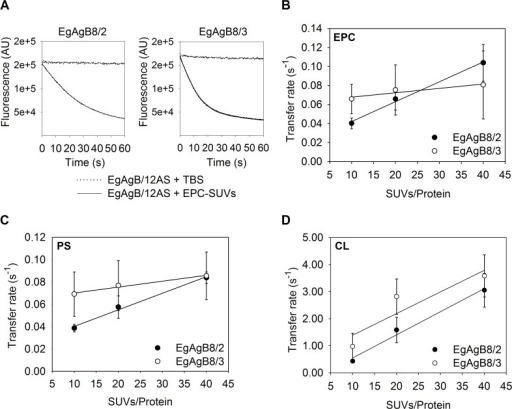 Effect of acceptor membrane concentration on 12-AS transfer from EgAgB8/2 and EgAgB8/3 to different SUVs.Transfer of 12-AS from EgAgB8/2 or EgAgB8/3 to SUVs was monitored by adding SUVs in a molar ratio of 10:1, 20:1 and 40:1 (SUVs/Protein) to the complex EgAgB8/2:12AS or EgAgB8/3:12AS (15:1 mol:mol). (A) Representative kinetic trace obtained when combining EgAgB8–12AS with NBD-PC-containing vesicles (molar ratio SUV/Protein of 10:1). Photobleaching control adding TBS instead of NBD-PC/SUVs is shown. (B) SUVs containing 100% EPC; (C) 75% EPC, 25% PS or (D) 75% EPC, 25% CL were used. For each experimental condition at least five replicates of the kinetic curves were done. All curves were well-described by a single exponential function to obtain each transfer rate value employing SigmaPlot software. Transfer rates (mean ± SD) of three independent experiments are reported. Statistical analysis of the data was carried out employing ANOVA followed by Tukey's Post Hoc Test from GraphPad Prism software.