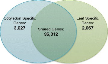 Leaf and cotyledon specific genes. Of the 41,106 genes identified as expressed in the experiment, 7.4 % of genes were expressed exclusively in the cotyledons, 5 % of the genes were expressed only in the leaf, and more than 87 % were shared between the two tissues. The list complete list of genes that demonstrated tissue specific expression is included in Additional file 9