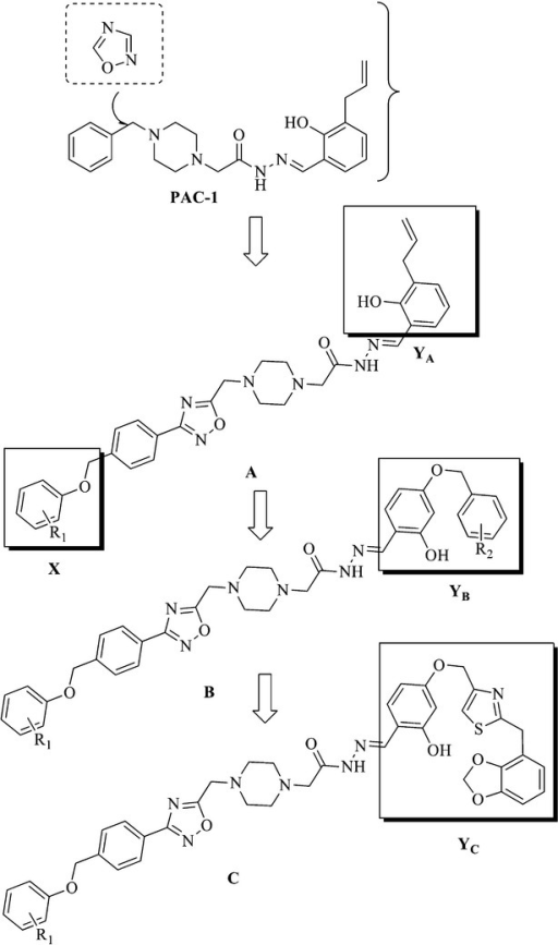 The general structures of target compounds.