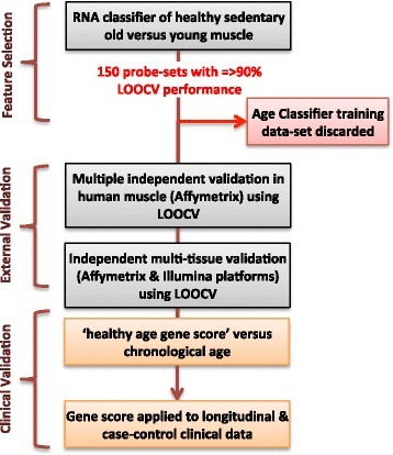 Development, validation and clinical application of ageing diagnostic. Overview of the selection process and use of RNA probe-sets for the development and validation of the healthy physiological age classifier. We identified useful probe-sets from a possible starting number of ~54,000 during step one [e.g. probe-sets with leave-one-out cross-validation (LOOCV) performance ≥ 90 %]. We then evaluated the performance of the top-ranked 150 probe-sets in a number of independent muscle, brain, and skin samples, demonstrating that the signature was diagnostic for age. We then applied the 150-probe-set healthy ageing signature to several clinical studies, as illustrated at the end of the workflow. Key features included discarding the training data set immediately after selecting the 150 probe-sets and relying on LOOCV and full external validation processes