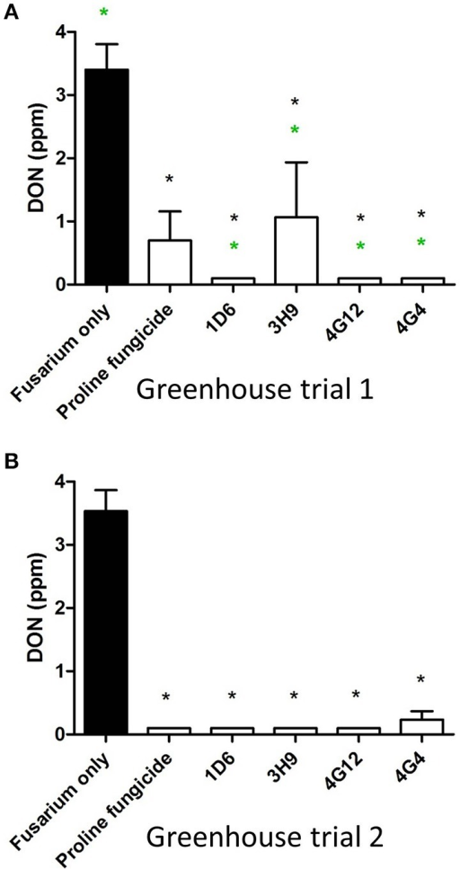 Test for the ability of the candidate endophytes to reduce DON mycotoxin accumulation in maize grain during storage. DON measurements after storage of maize grain from: (A) greenhouse trial 1 (summer 2012), and (B) greenhouse trial 2 (summer 2013). For both trials, n = 3 pools of seeds. The black asterisk indicates that the treatment means were significantly different from the Fusarium only treatment at p ≤ 0.05. The green asterisk indicates that the treatment means were significantly different from the prothioconazole fungicide (Proline) treatment at p ≤ 0.05.