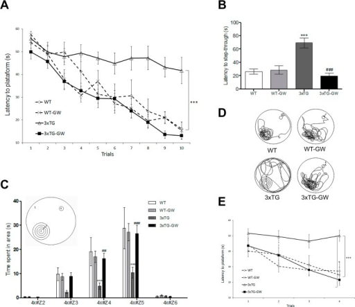 LXR agonist restores memory and cognition in the 3xTg-AD mice.Spatial learning and memory were evaluated by means of the MWM after 12 weeks of treatment with the LXR agonist GW3965. (A) Learning task: treated 3xTg-AD mice took significantly less time to learn the location of the hidden platform. Statistical significant differences were found by using two-way ANOVA. *** p<0.001. (B-D) Retention tasks: (B) latency to step-through place of platform in seconds. Significant differences were found by using ANOVA followed by Tukey's multiple comparison test; (C) 4X analysis: time spent nearest the platform; (D) Representative samples of paths taken during the retention task illustrate the marked preference between treated and untreated WT and 3xTg-AD mice. (E) Reversal learning: treated 3xTg-AD mice took significantly less time to learn the new location of the hidden platform after two days of trials. All data were expressed as mean ± S.E.M. *** represents p < 0.001 compared with WT; ### represents p < 0.001 compared with untreated 3xTg-AD. Cohort sizes were: WT, n = 7; WT treated, n = 10; 3xTg-AD untreated, n = 8; treated 3xTG, (Randomized Females and Males) n = 12. Learning task: all data were expressed as mean ± S.E.M. *** represents p < 0.001, compared with WT; ### represents p < 0.001 compared with untreated 3xTg-AD.