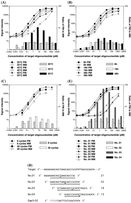 Effects of variation of hybridization, wash, and probe conditions on signal intensities identified by titration assay of hybridization with target oligonucleotide, Dap3-02, without cDNA background. The line plots show absolute signal intensities of PM and MM probes. The bar graphs show ratios of signal intensity of PM to that of cognate MM. The average signal intensities determined using GCOS 1.0 software were derived from two replicate GeneChip analyses except for the experiment regarding wash conditions. The signal intensities under stringent wash conditions were derived from a single GeneChip analysis. (A) Hybridization temperature. (B) Duration of hybridization. (C) Number of stringent wash cycles. (D) Setting of adjacent probe pairs of AFFX-DapX-3_at No. 02, such as AFFX-DapX-3_at No. 01, No. 03, and No. 04, and the possible duplexes formed between target oligonucleotide, Dap3-02, and the adjacent probes. The constitutive part of the sense strand of the spiked probe, Dap, is shown as the target sequence. The middle four sequences are adjacent probe pairs and the flip-flop position is underlined. The possible base pairs hybridizing with target oligonucleotide, Dap3-02, are indicated by asterisks and the numbers beside the sequences indicate the numbers of hybridizing base pairs. The sequence of the target oligonucleotide, Dap3-02, is shown at the bottom. The gray nucleotides in the 3′ end of Dap3-02 indicate the excised six bases in the target oligonucleotide, Dap3-02-6nt, from which results are shown in Figures 3 and 4B. (E) Absolute signal intensities of adjacent probe pairs, AFFX-DapX-3_at No. 01, No. 03, and No. 04.