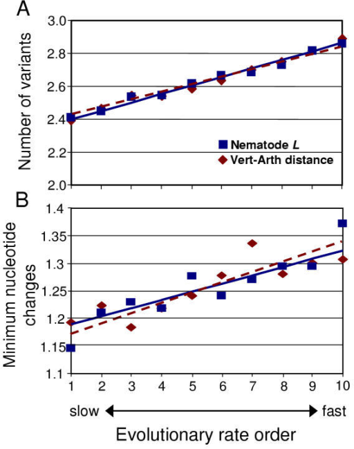 Test of mutational saturation in the four-taxon data set. (A) The mean number of variants per variable site was averaged for ten groups often according to evolutionary rate (vertebrate-arthropod distance = diamonds, nematode branch length = squares). (B) The minimum number of nucleotide changes required for unique nematode variants were also averaged according to evolutionary rate. Trend lines are indicated (solid for vertebrate-arthropod distance, dashed for nematode branch length).