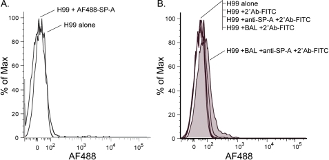 SP-A does not directly bind to encapsulated C. neoformans yeast.(A.) C. neoformans (1×105) were treated with Alexa Flour 488 labeled SP-A (20 µg/ml) for 60 minutes at 37°C. Surfactant protein binding was quantified by flow cytometric analysis. SP-A binding was not detected. (B.) In contrast, C. neoformans (1×105) treated with undiluted BAL exhibited a small amount of SP-A binding. Results are one representative experiment of at least three (A.) or two (B.) experiments performed.