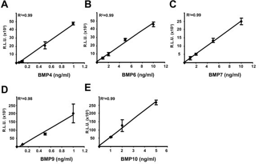 Determination of the linear range of activation of BRE-Luc by BMPs. C2C12BRE cells were treated as in Figure 1 with increasing concentrations of (A) BMP4, (B) BMP6, (C) BMP7, (D) BMP9 and (E) BMP10. Luciferase activity was normalised to protein content. Relative luciferase units (RLU) following background subtraction are shown. Data shown is a representative experiment performed in quadruplicate ± SD.