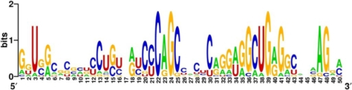 RNA motif.Detected novel miRNA target context sequence motif downstream of experimentally supported human miRNA target sites motif as sequence logo plot. The overall height of the stack indicates the sequence conservation at that position, while the height of symbols within the stack indicates the relative frequency of each nucleic acid at that position. Here the motif calculated from the non-redundant sequence set with maximum 65% allowed homology is shown. Noteworthy are the overall high GC content, the strong increase of cytosine nucleotides around the motif position 22 and a peak of guanine residues around motif positions 39.