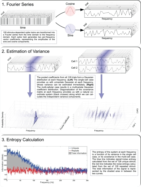 The three steps that are required for calculating the information carried by a neural population: Fourier representation of each spike train; variance estimation, and entropy-information calculation.