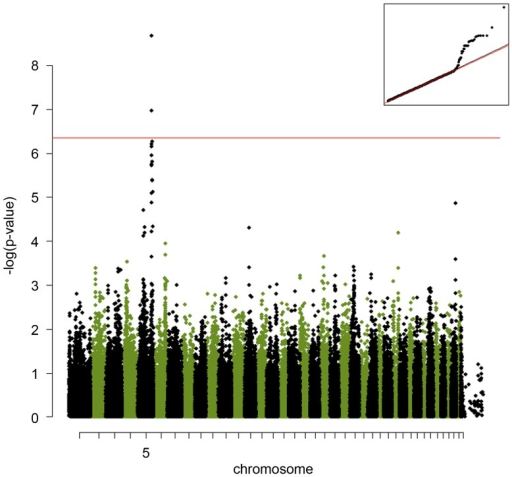 A genome-wide association study of the IgE-responsiveness to A. siro in Labrador Retrievers performed using a mix-model approach efficiently corrected for the population stratification.The red line indicates the Bonferroni-corrected significance level (p<3.9×10−7). The Quantile-quantile (QQ) plot shows the observed versus expected log p-values (on the top-right). The straight line on the QQ plot indicates the distribution of SNP markers under the  hypothesis and the skew at the right edge indicates that these markers are stronger associated with the A. siro IgE response than it would be expected by chance.