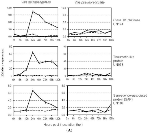 Real-time quantitative RT-PCR analysis of transcript accumulation in two grapevine genotypes in response to E. necator at 0, 6, 12, 24, 48, 72, 96, and 120 hpi. Data represents means of triplicate data. Expression profiles of genes in the disease/defense category (A); genes involved in Ubiquitin/26S proteasome pathway (B); genes in the metabolism category (C); and genes with no known homologs (D) are shown. Solid line, E. necator-inoculated samples; dashed line, mock-inoculated samples.