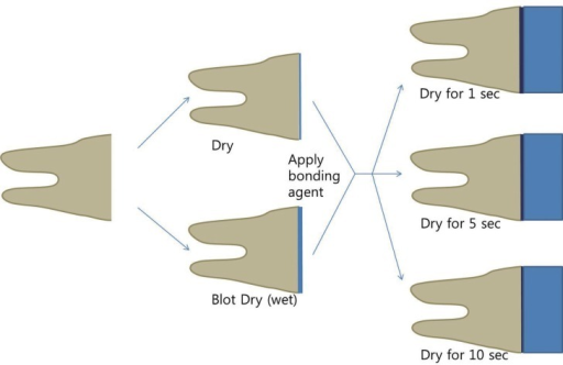 The schematic view of the experimental design. Wetness of the tooth surface was divided into dry and blot dry groups and drying times after adhesive application were into 1, 5 and 10 seconds groups for each adhesive agent.